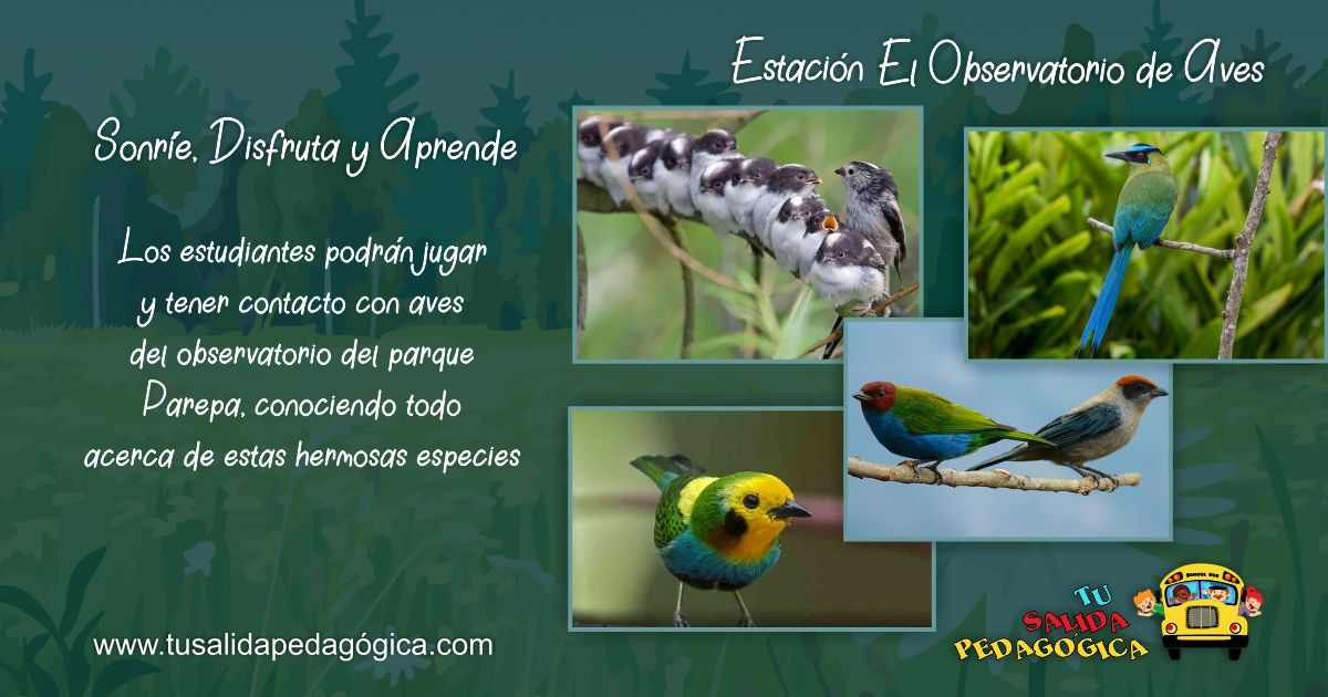 10 OBSERVATORIO AVES